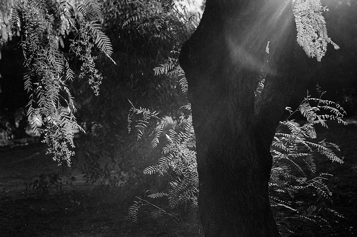 Sunbeam in trees
