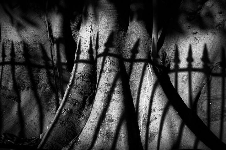 Shadow of fence onto tree