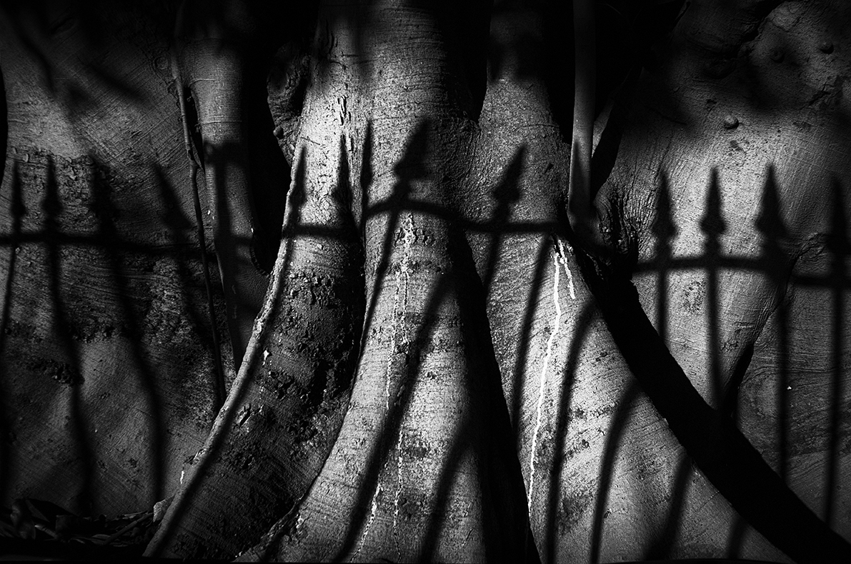Shadow of fence on tree