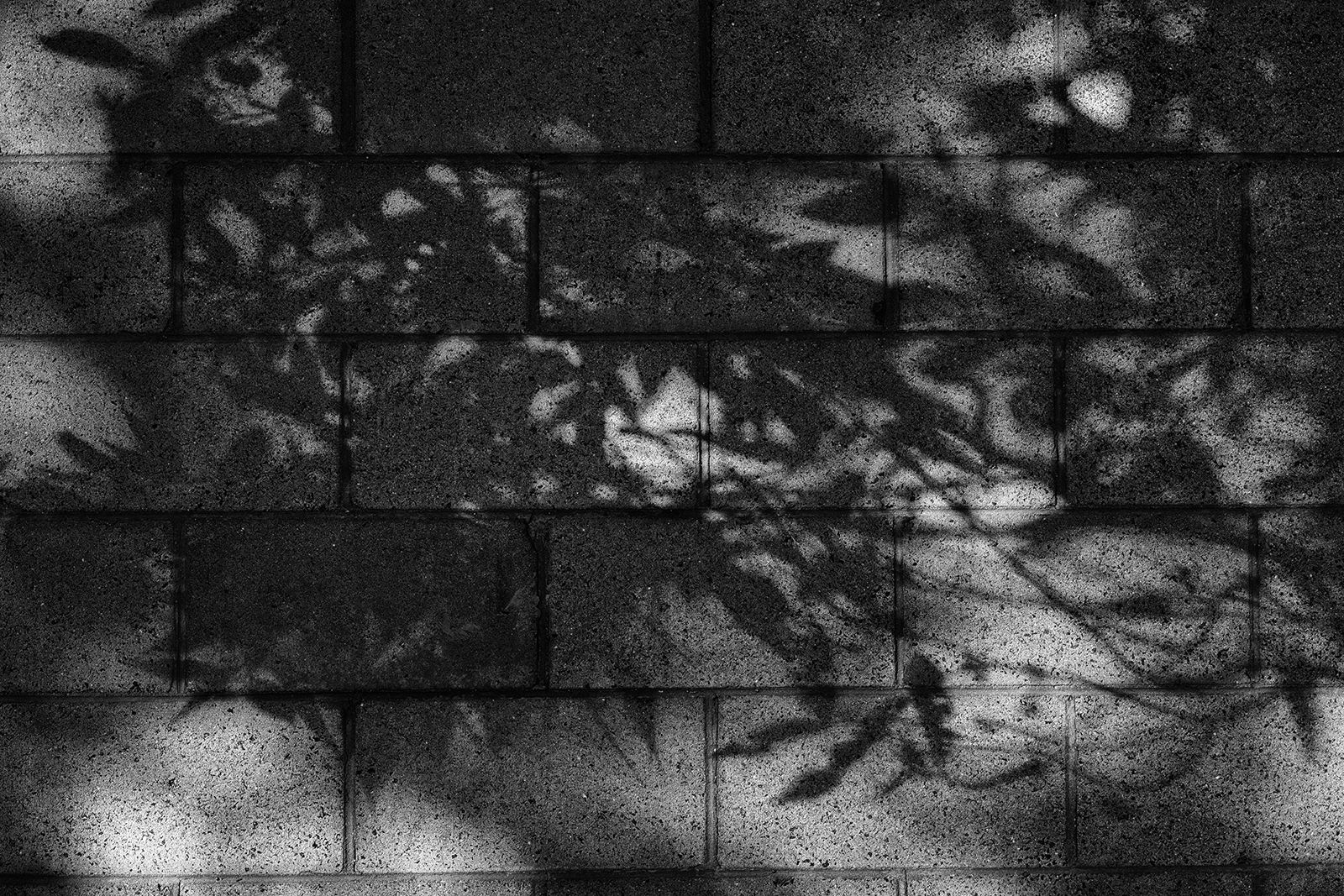 Shadows of leaves and branches on a brick wall